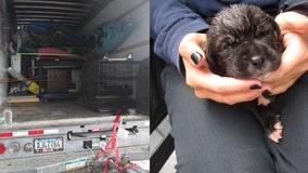 Deputies: 17 animals 'on brink of death' found in U-Haul in Flagler County
