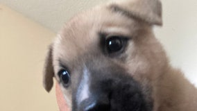 Florida sheriff's office warns of puppy scams: What to watch out for