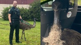 Deputies: Emu captured after being found in yard of Florida home